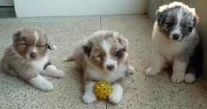 chien 2 douces pattes